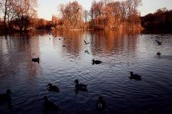 Μόναχο Englischer Garten, φθινοπωρινή άποψη Στοκ Εικόνες
