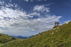 Μόνα δέντρα στο βουνό Στοκ φωτογραφία με δικαίωμα ελεύθερης χρήσης