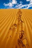 Μόνα ίχνη στον αμμόλοφο άμμου ερήμων Στοκ Εικόνες
