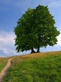 μόνα δέντρα Στοκ Φωτογραφίες