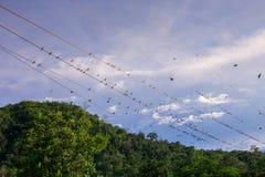 μόνα καλύτερα πουλιά που κάνουν τη preening συνεδρίαση τραγουδιού μερών από τα πράγματα από κοινού Στοκ εικόνα με δικαίωμα ελεύθερης χρήσης
