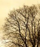 Μόνη άποψη δέντρων στη χειμερινή εποχή Στοκ φωτογραφία με δικαίωμα ελεύθερης χρήσης