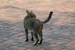Μόνη γάτα οδών Στοκ φωτογραφία με δικαίωμα ελεύθερης χρήσης