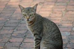 Μόνη γάτα οδών Στοκ Φωτογραφίες