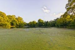 Μόνη λίμνη Wirral UK Raby στοκ φωτογραφία