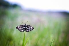 Μόνη πεταλούδα στοκ εικόνα με δικαίωμα ελεύθερης χρήσης