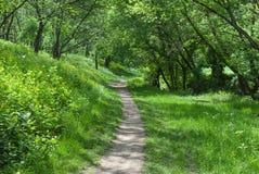 Μόνη πορεία στο δάσος Στοκ Φωτογραφία