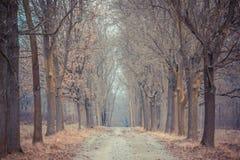 Μόνη πορεία στο δάσος Στοκ Εικόνα