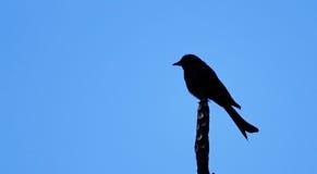 Μόνη σκιαγραφία πουλιών στοκ εικόνα