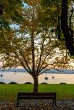 Μόνη συνεδρίαση ατόμων μεταξύ δύο δέντρων σε έναν πάγκο και της εξέτασης τη λίμνη Ιταλία, Arona Στοκ Εικόνες