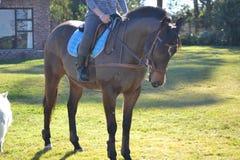 Μόνιμο άλογο Στοκ εικόνες με δικαίωμα ελεύθερης χρήσης