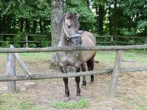 Μόνιμο άλογο Στοκ εικόνα με δικαίωμα ελεύθερης χρήσης