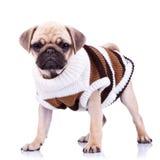 Μόνιμο σκυλί σφουγγαριστρών που φορά τα ενδύματα Στοκ εικόνες με δικαίωμα ελεύθερης χρήσης