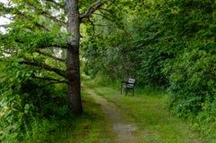 μόνοι κορμοί δέντρων στο δάσος το καλοκαίρι Στοκ Φωτογραφίες
