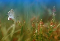 Μόνος λίγη πεταλούδα Στοκ φωτογραφία με δικαίωμα ελεύθερης χρήσης