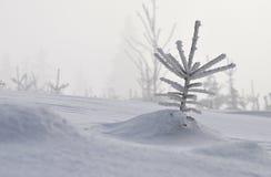 Μόνος λίγη χιονώδης ερυθρελάτη στο χειμερινό τοπίο Στοκ εικόνα με δικαίωμα ελεύθερης χρήσης