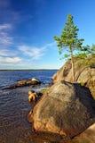 μόνος βράχος πεύκων Ακτή της άσπρης θάλασσας, Καρελία, Ρωσία Στοκ Φωτογραφίες
