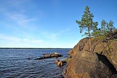 μόνος βράχος πεύκων Ακτή της άσπρης θάλασσας, Καρελία, Ρωσία Στοκ εικόνες με δικαίωμα ελεύθερης χρήσης