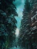 Μόνος δρόμος στο δάσος Στοκ Φωτογραφία