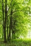 Μόνος πάγκος μεταξύ των δέντρων σε ένα πράσινο δάσος θερινό ημερησίως άνοιξης με τα διάφορα είδη φρέσκου πάρκου φύσης εγκαταστάσε Στοκ Εικόνες