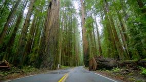 Μόνος δρόμος στην υδρονέφωση που οδηγεί μέσω του εθνικού πάρκου Redwoods απόθεμα βίντεο
