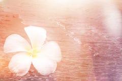 Μόνος σιωπής τόνος χρώματος παραλιών εκλεκτής ποιότητας για το υπόβαθρο Στοκ Εικόνα