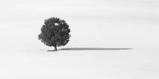 μόνος χειμώνας δέντρων Στοκ φωτογραφία με δικαίωμα ελεύθερης χρήσης