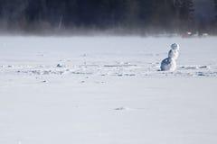Μόνος χιονάνθρωπος στη μέση μιας παγωμένης λίμνης Στοκ Εικόνες