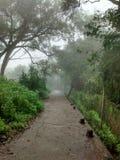 Μόνος misty δρόμος Στοκ Εικόνα