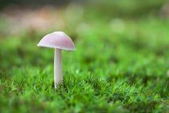 Μόνο άσπρο μανιτάρι στη βλάστηση βρύου Στοκ φωτογραφία με δικαίωμα ελεύθερης χρήσης