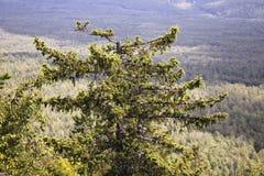 Μόνο δέντρο Ð  στο βουνό Στοκ Εικόνες