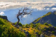 μόνο δέντρο Άποψη των βουνών στη διαδρομή Pico Ruivo - Encumeada, νησί της Μαδέρας, Πορτογαλία, Ευρώπη Στοκ Φωτογραφίες