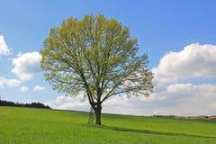 Μόνο δέντρο, κάθισμα κυνηγών, γερμανικό τοπίο Στοκ εικόνα με δικαίωμα ελεύθερης χρήσης
