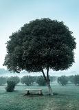 Μόνο δέντρο και κενός πάγκος στοκ φωτογραφίες με δικαίωμα ελεύθερης χρήσης