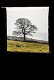 Μόνο δέντρο μέσω του πλαισίου 2 Στοκ Φωτογραφίες