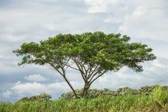 Μόνο δέντρο με το μπλε ουρανό με τα σύννεφα Στοκ φωτογραφία με δικαίωμα ελεύθερης χρήσης