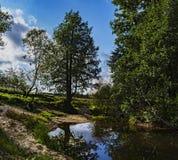 Μόνο δέντρο που στέκεται λαμβάνοντας υπόψη τον ήλιο πρωινού Στοκ Εικόνες