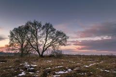 Μόνο δέντρο σε ένα λιβάδι Στοκ Εικόνες