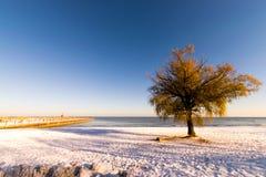 Μόνο δέντρο σε μια χιονισμένη παραλία Στοκ Φωτογραφία