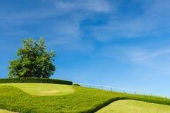 Μόνο δέντρο στην κορυφή ενός λόφου Στοκ εικόνες με δικαίωμα ελεύθερης χρήσης