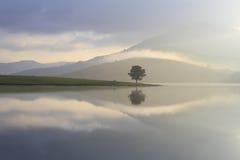 Μόνο δέντρο στη λίμνη Στοκ εικόνες με δικαίωμα ελεύθερης χρήσης