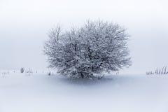 Μόνο δέντρο στη χειμερινή θύελλα Στοκ εικόνες με δικαίωμα ελεύθερης χρήσης