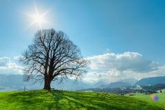Μόνο δέντρο στον πράσινους λόφο, το μπλε ουρανό, τα σύννεφα και τα βουνά Στοκ εικόνες με δικαίωμα ελεύθερης χρήσης