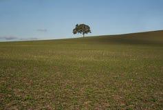 Μόνο δέντρο στο αγροτικό έδαφος - τοπίο Στοκ Φωτογραφίες