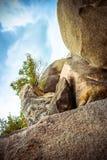 Μόνο δέντρο στο τοπ βουνό στο υπόβαθρο ουρανού Στοκ φωτογραφία με δικαίωμα ελεύθερης χρήσης