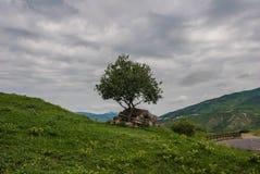 Μόνο δέντρο στο υποστήριγμα Jvari Στοκ εικόνες με δικαίωμα ελεύθερης χρήσης