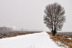 Μόνο δέντρο στο χιονώδη δρόμο Στοκ Εικόνες