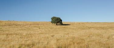 Μόνο δέντρο της ζωής Στοκ Εικόνες