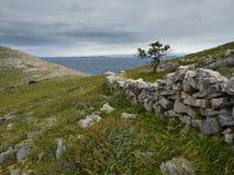 Μόνο δέντρο το νεφελώδες και θυελλώδες πρωί Στοκ εικόνα με δικαίωμα ελεύθερης χρήσης