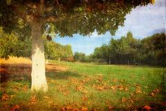 μόνο δέντρο φθινοπώρου Ρομαντικό τοπίο φθινοπώρου παλαιός τοίχος σύστασης τούβλου ανασκόπησης Στοκ Φωτογραφίες